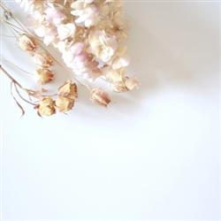 白の純粋さのイメージ